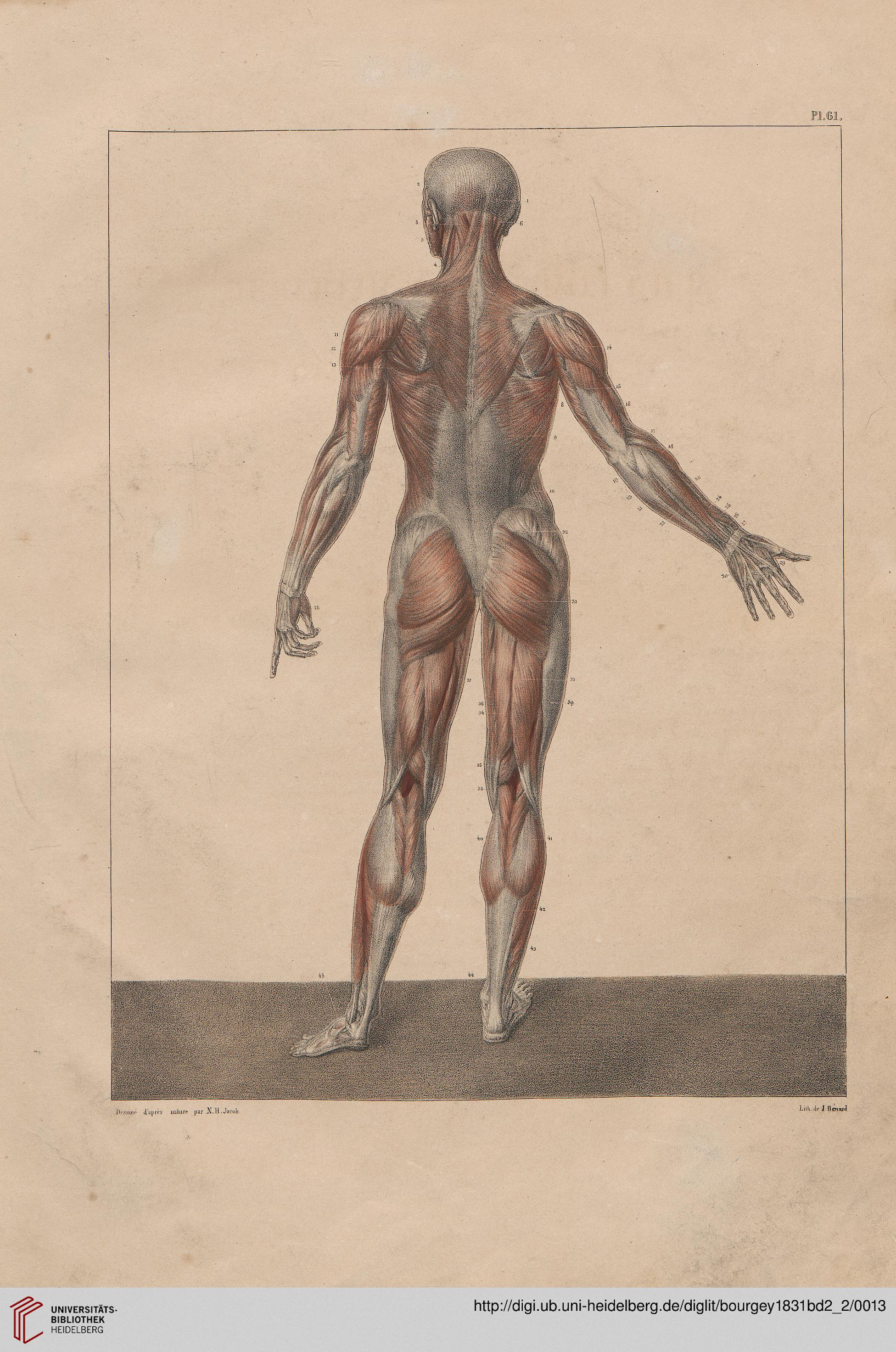 Bourgery, Jean Baptiste Marc; Jacob, Nicolas Henri [Hrsg.]: Traité ...