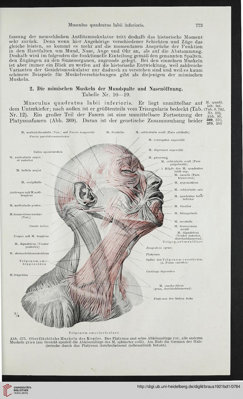 Ziemlich Alex Grau Anatomie Kunst Ideen - Anatomie Ideen - finotti.info