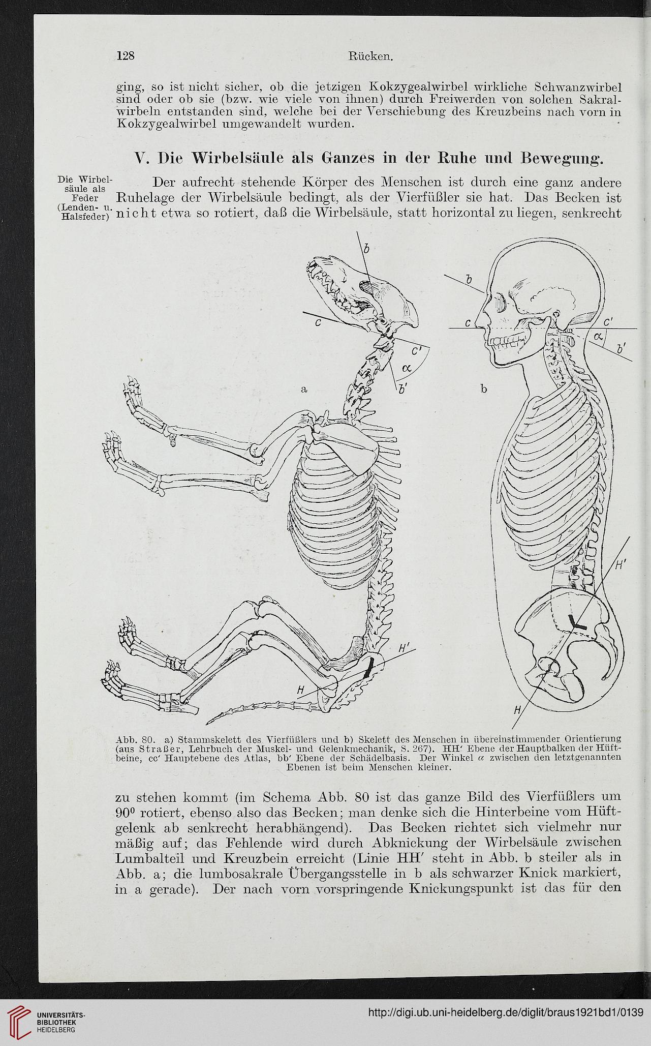 Gemütlich Lumbalen Sakrale Wirbelsäule Anatomie Galerie - Anatomie ...