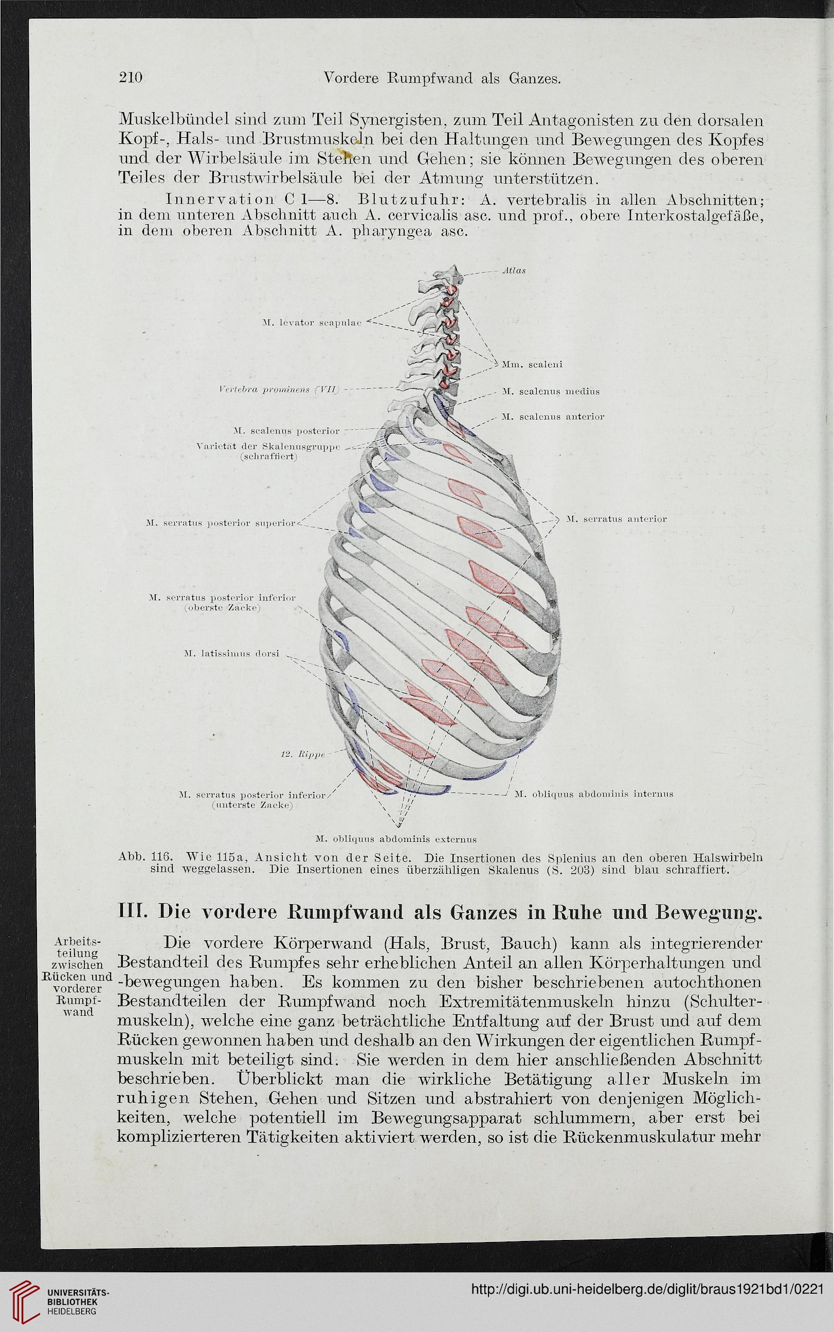 Charmant Synergisten In Der Anatomie Galerie - Anatomie Ideen ...