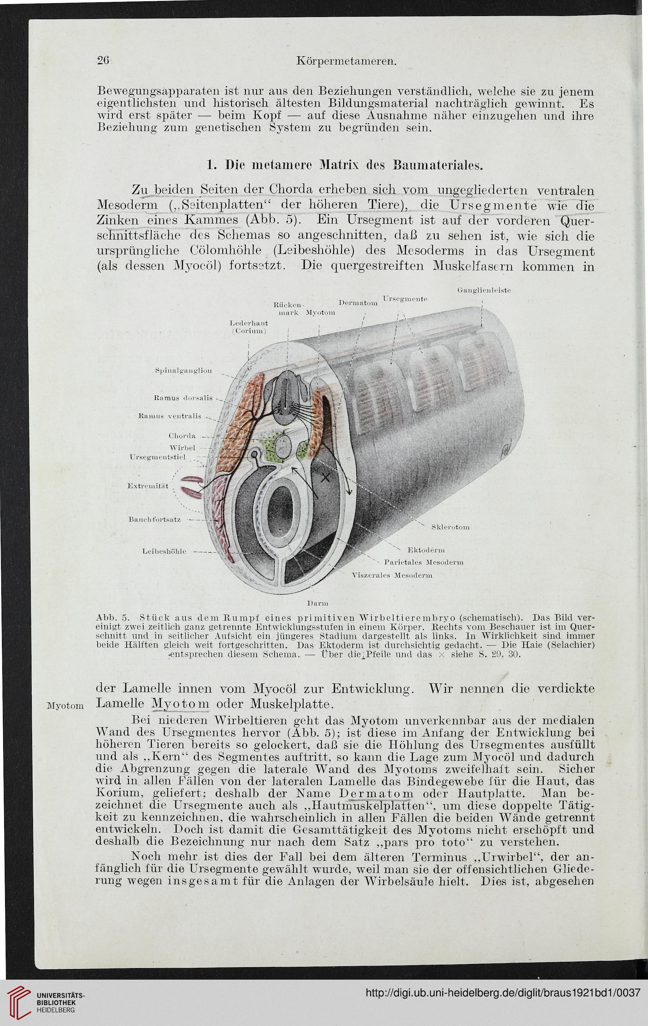 Ausgezeichnet Anatomie Einer Weinrebe Ideen - Menschliche Anatomie ...