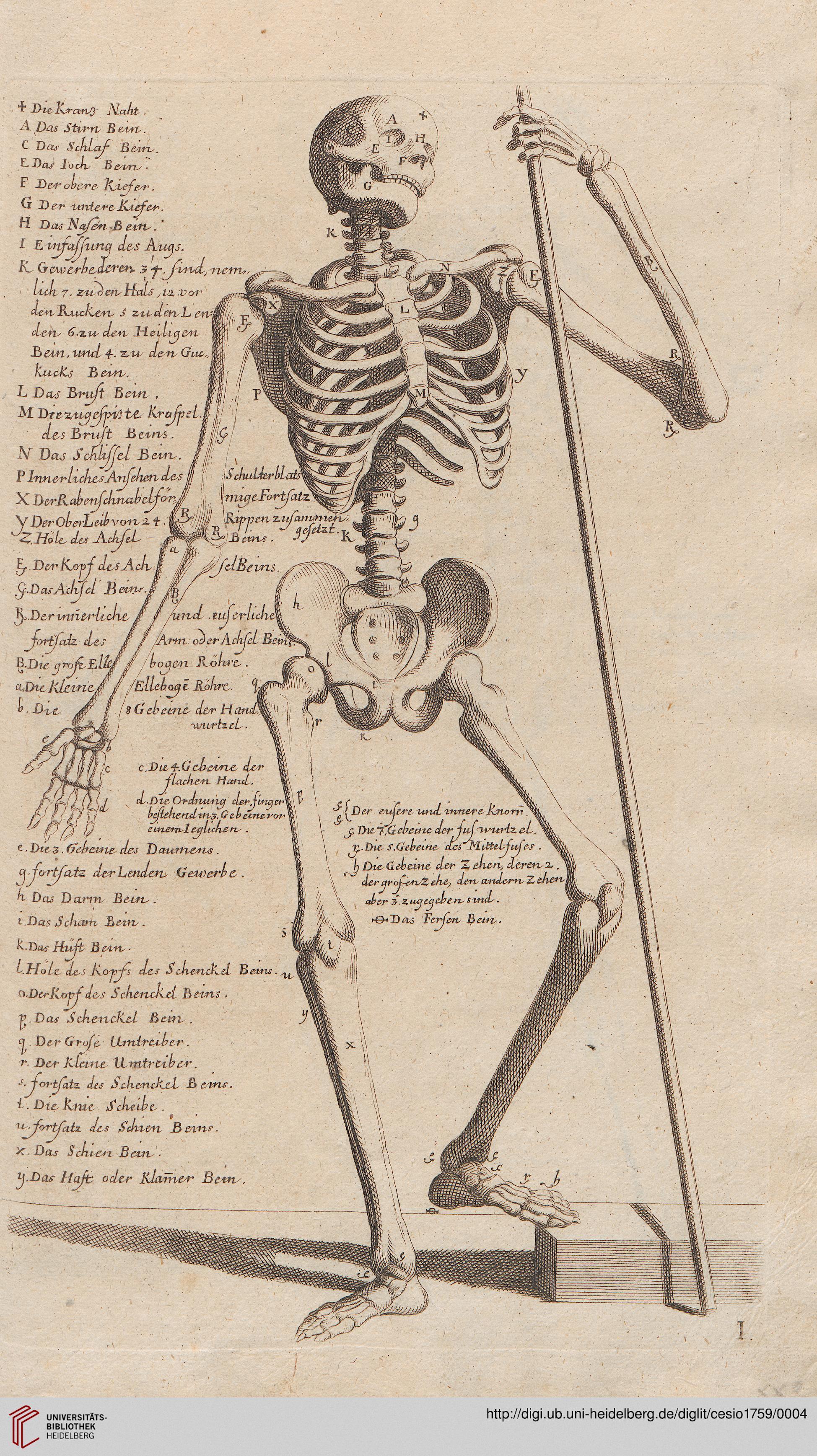 Cesio, Carlo; Preißler, Johann Daniel [Übers.]: L\'anatomia dei ...