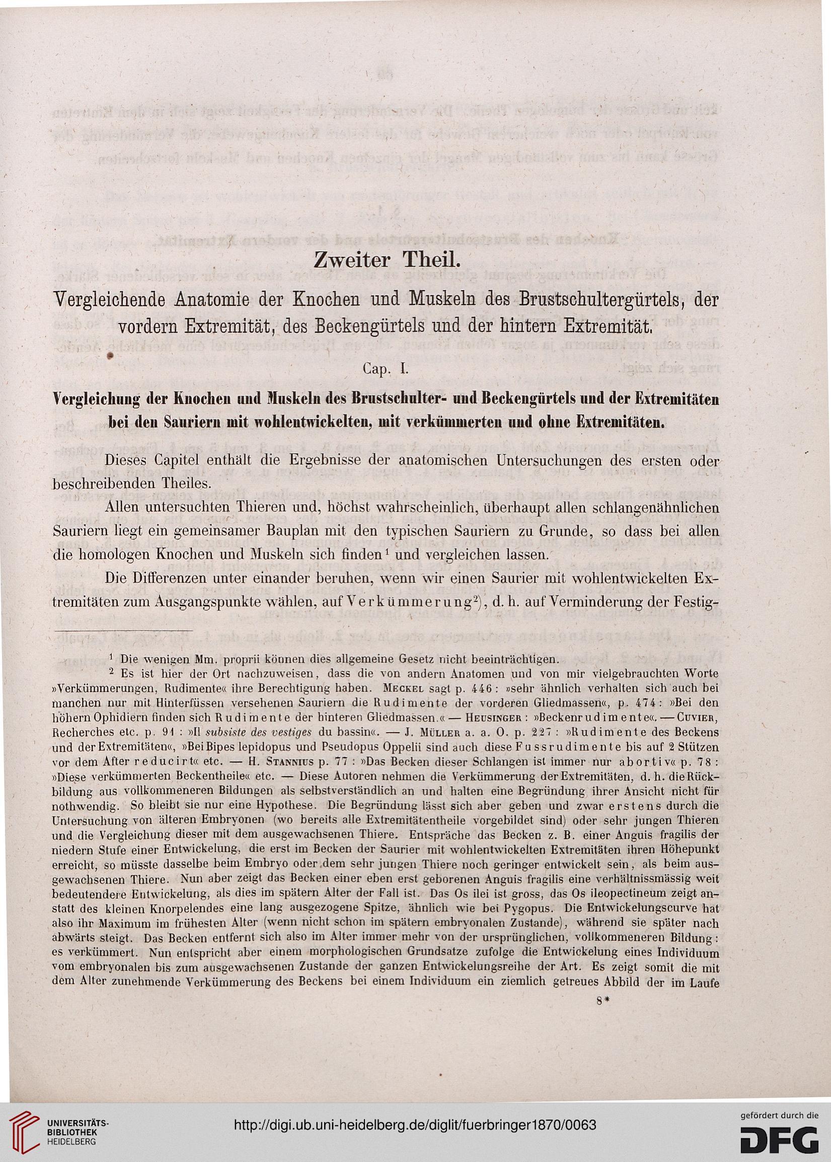 Fürbringer, Max: Die Knochen und Muskeln der Extremitäten bei den ...