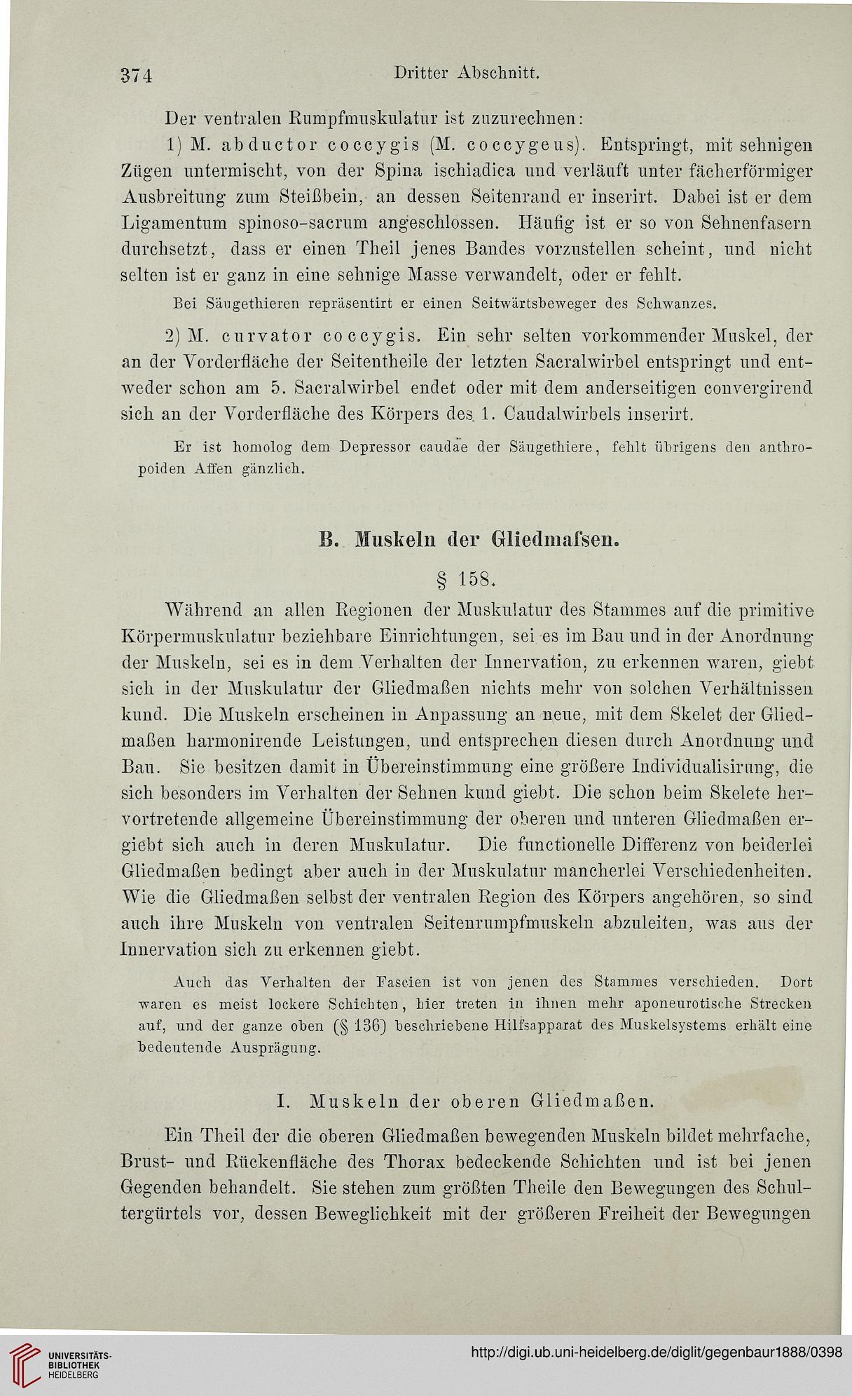 Berühmt Sacralwirbel Ideen - Physiologie Von Menschlichen ...