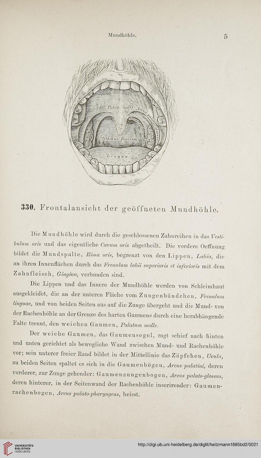 Heitzmann, Carl: Die descriptive und topographische Anatomie des ...