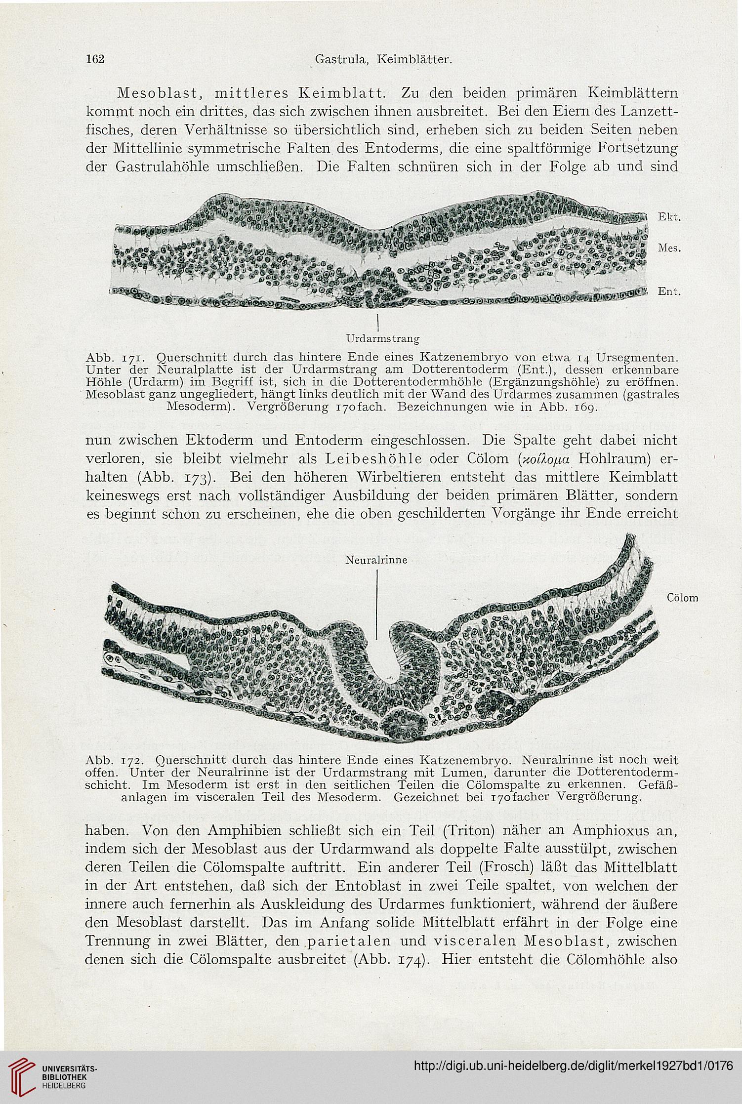 Großzügig Lachs äußere Anatomie Galerie - Anatomie Und Physiologie ...