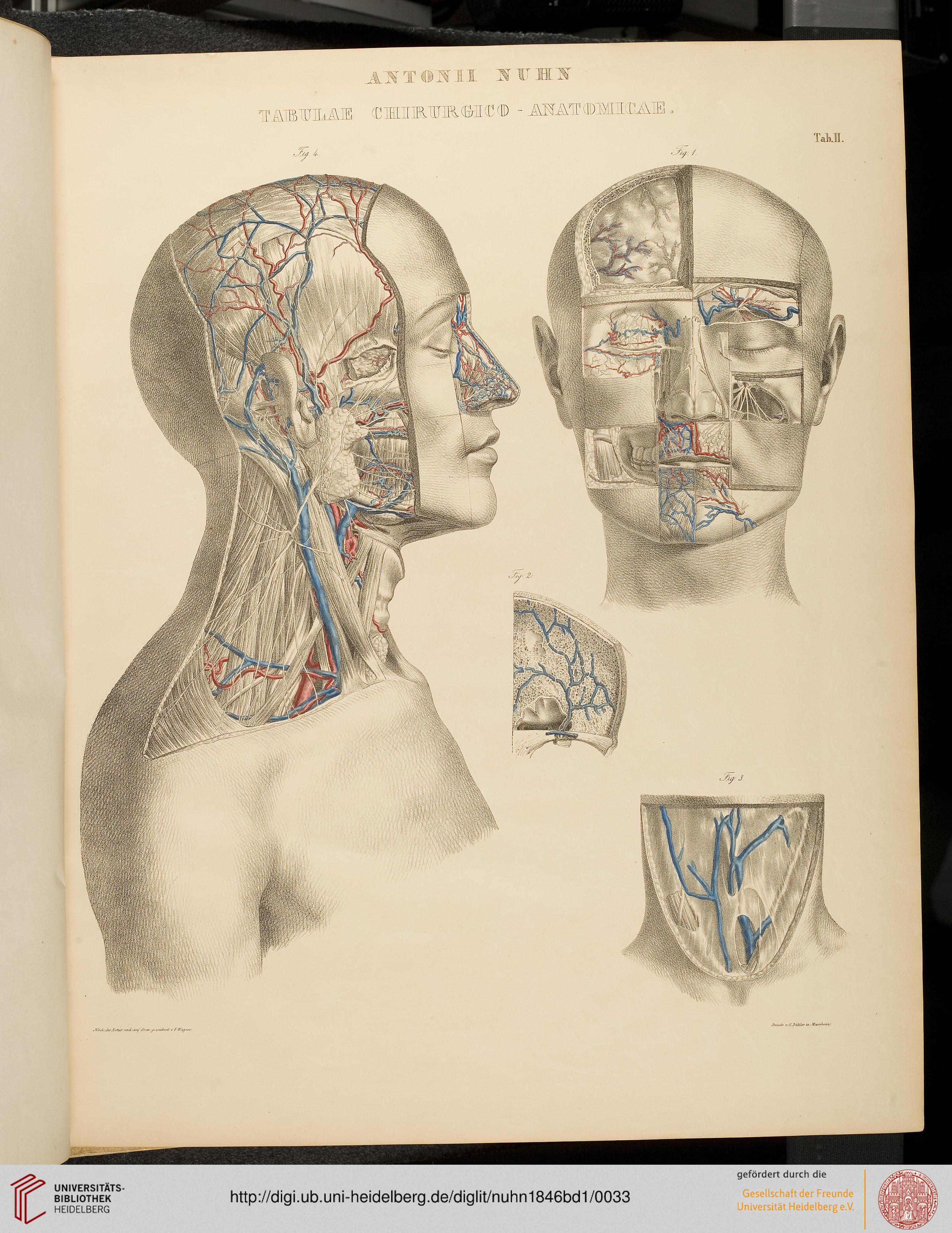 Beste Chirurgische Anatomie Des Halses Galerie - Anatomie Ideen ...