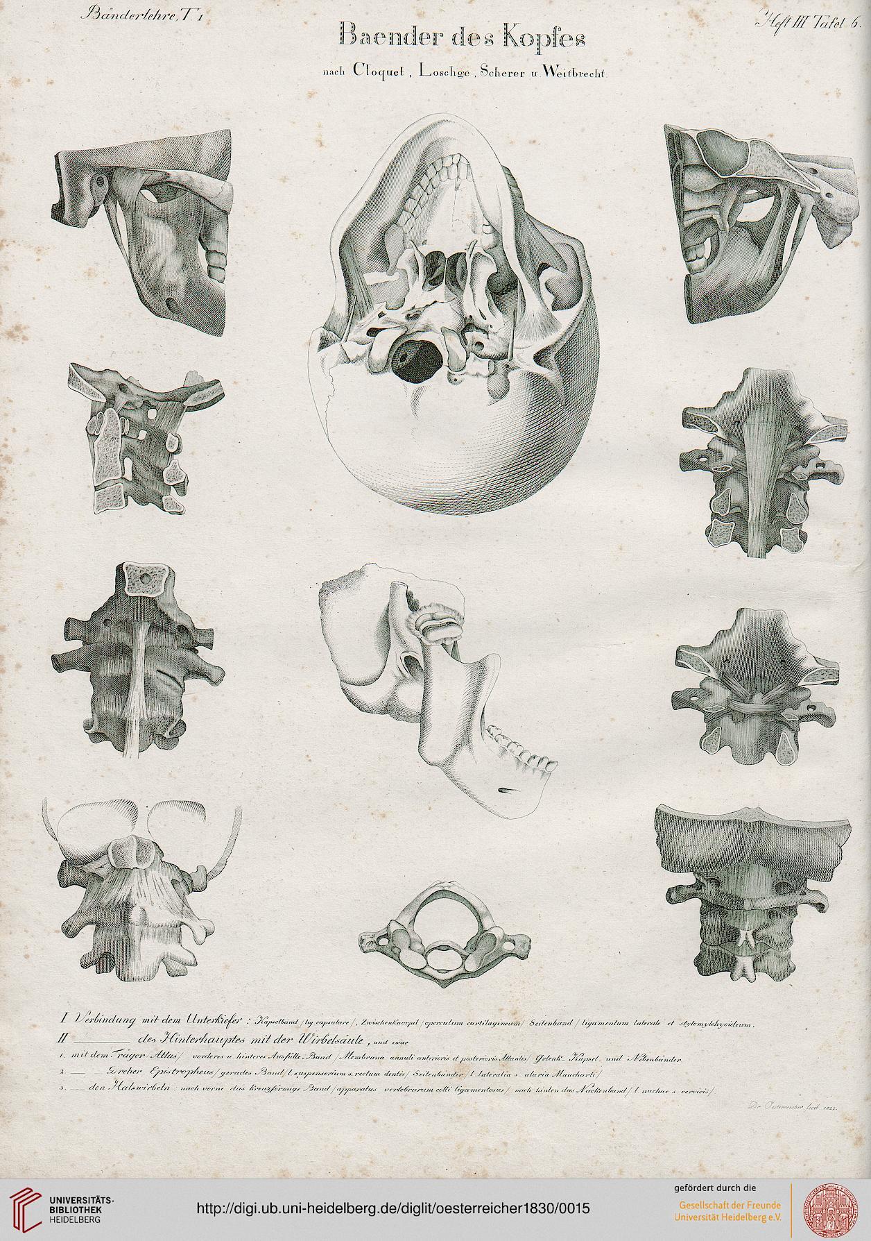 Oesterreicher, Johann Heinrich: Anatomische Steinstiche Oder ...