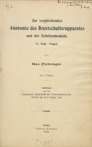 Fürbringer, Max: Zur vergleichenden Anatomie des ...